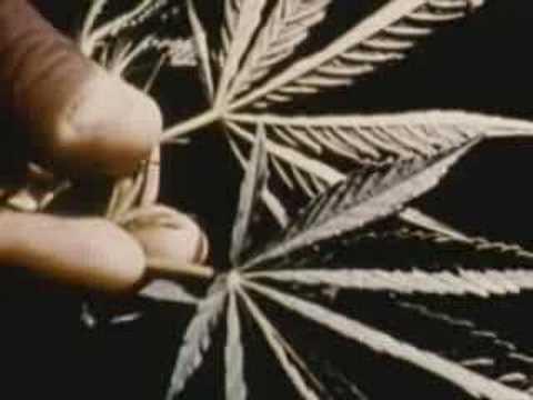 Ostrzeżenie przed paleniem marihuany