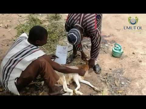 Kurban Çalışmaları Afrika - 2020