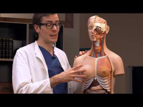 Die Korrektion der Brust und des Bauches