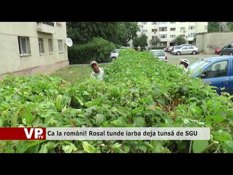 Ca la români! Rosal tunde iarba deja tunsă de SGU