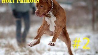 Best Prikols/Fails 2015 #2