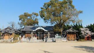 住吉神社(大久保町) 桜