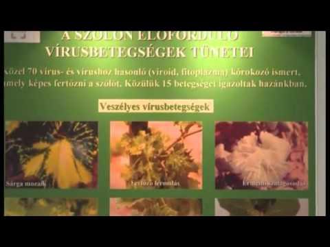 Homeopátia a férgek kezelésében