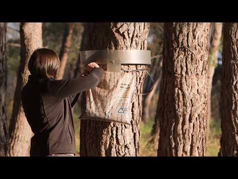 Collar Ecopiege anti-orugas procesionarias del pino