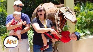 faze tari faza cu un dinozaur