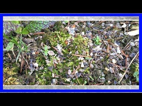 Hornspäne: Herkunft, Verwendung und Wirkung des Düngers
