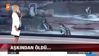 PENGUEN AŞKINDAN ÖLDÜ...