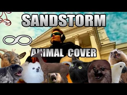 11 Best Animal Covers Music News Ultimate Guitar Com