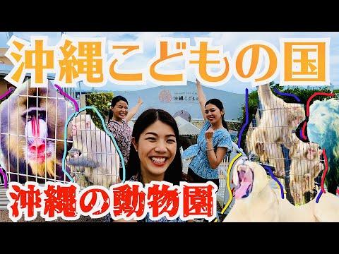 【沖縄こどもの国】ホワイトライオンからヤクシマザルと出会える最高な動物園!