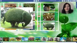 Проективная техника с МАК «Дерево»