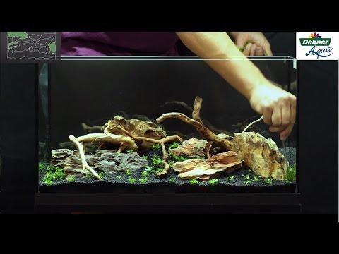 Das erste Aquarium - Dehner Aqua Start 60
