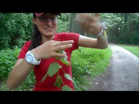 Die Behandlung lorbeer- vom Blatt die Schuppenflechte