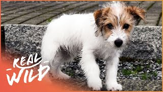 The Life Of An Abandoned Puppy | For The Love Of Dogs | Wild Things Shorts