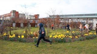 Cherry Orchard Community Garden - Video Diary 4