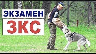Экзамен по ЗКС. Чехословацкий влчак Луна.