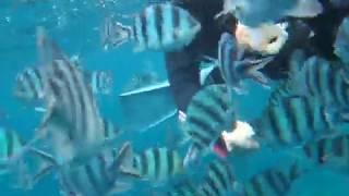 セブンオーシャンズクラブ(SEVEN OCEAN'S CLUB)