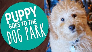 PUPPY'S FIRST TIME AT THE DOG PARK | PUPDATE #10
