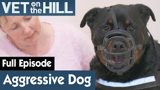 🐶 Extremely Aggressive Dog Must Be Masked   FULL EPISODE   S02E03   Vet On The Hill