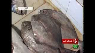 preview picture of video 'Iran beginning of fishing season in Persian Gulf آغاز فصل ماهيگيري در آبهاي خليج فارس آبادان ايران'