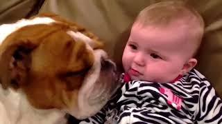 СМЕШНЫЕ ВИДЕО ПРИКОЛЫ С СОБАКАМИ / FUNNY VIDEO WITH DOGS