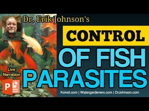 Ang pinakamahusay na gamot laban sa parasites