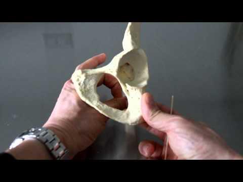 Magnete per lartrite del ginocchio
