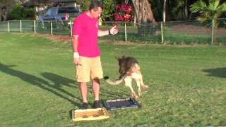preview picture of video 'Sit Means Sit Dog Training Video Heel to Front progressions'