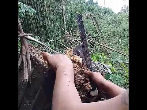 Pinatuyong chanterelles bumili mula sa mga parasito