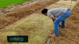 Paddy Transplanter Machine (Sowing till Transplanting)