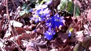 Весна в нашей деревне