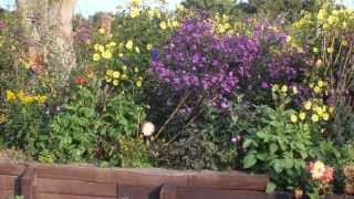Inspiring UK video about attractiveness of garden plants to bees and other insects