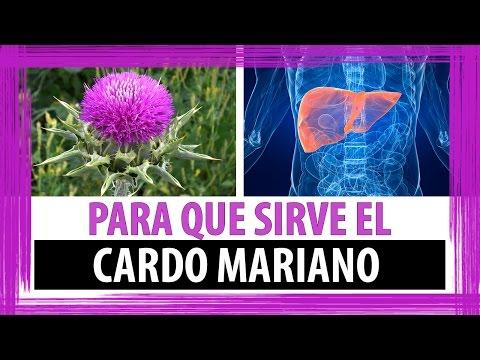 PARA QUE SIRVE EL CARDO MARIANO | COMO TOMAR EL CARDO PARA HIGADO Y VESICULA BILIAR