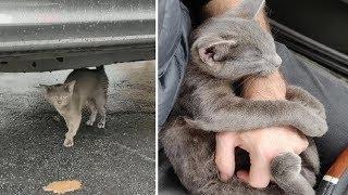 Бездомный котенок нуждался в помощи, когда к нему подошел мужчина, котенок не захотел его отпускать
