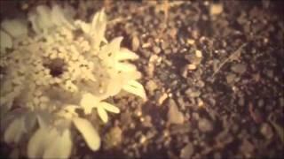 Shaila Dúrcal - Tanto amor (Versión Ranchera)