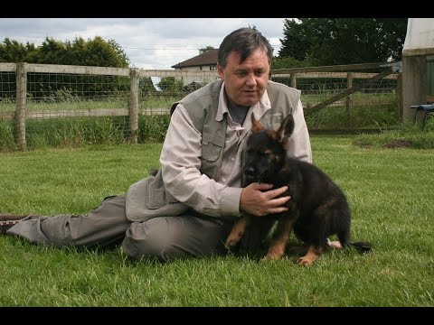 HOW TO BECOME A DOG BEHAVIOURIST - COLIN TENNANT ...