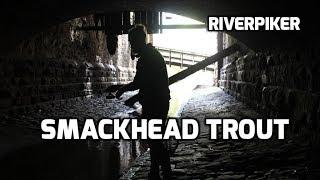 Smackhead trout (video 200)
