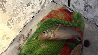 Малышевская протока зимняя рыбалка