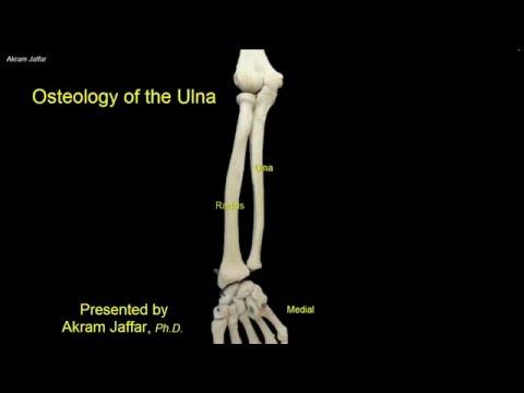 Osteologia kości łokciowej