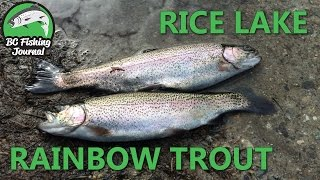 Rice Lake, North Vancouver - Rainbow Trout Fishing