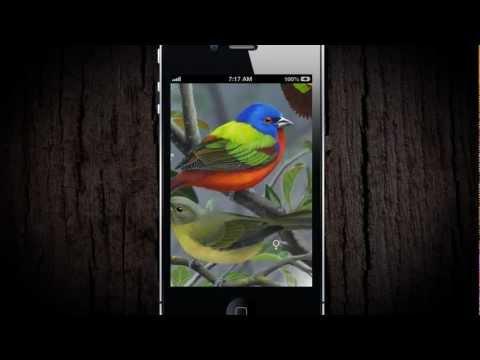 Video of iBird Yard Plus