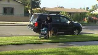 Will this untrained dog protect his owner from a mugger?  www.BobsDogs.com