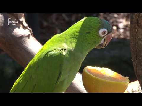Zoológico de São Bernardo preserva bioma da Mata Atlântica