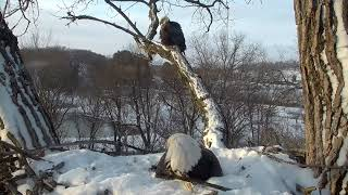 Decorah Eagles 2-13-19, 7-45 am Mom shows her interest