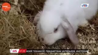 Наше УТРО на ОТВ – пушистое утро о питании кроликов