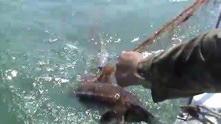 Браконьерский лов осетра в Черноморском биосферном заповеднике