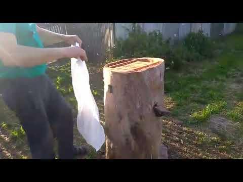 КАК ЗАСЕЛИТЬ ПЧЕЛ В КОЛОДУ -рой пчел в роевни,Beekeeping technology