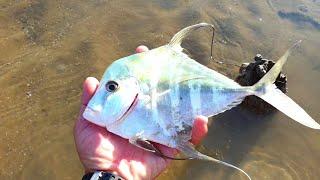 Bắt được bạch tuộc, ốc móng tay và tôm tích vàng khi triều xuống, gặp cá nóc, mực nang, cá đuối