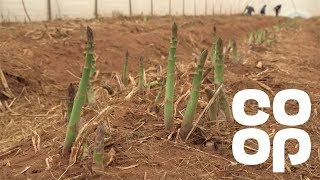 Co-op Food | Meet The Producer – British Asparagus