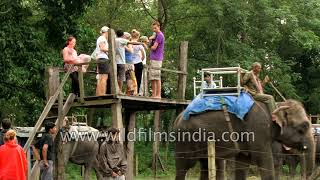 Elephant station for tourists to mount hathis at Chitwan in Nepal