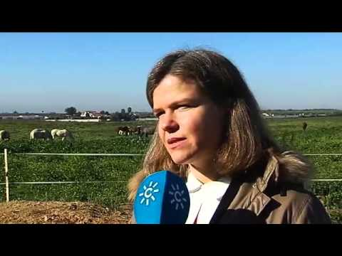 ANCCE | Purebred Spanish Horses are the start topic for Canal Sur TV's regional and local news run